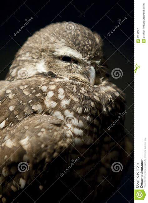 Sleepy Owl sleepy owl clipart clipart suggest
