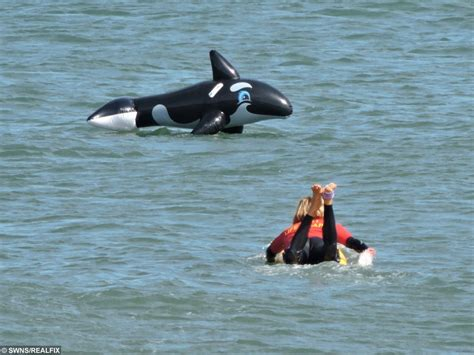 killer whale rescue lifeguard dramatically rescues a stranded killer whale
