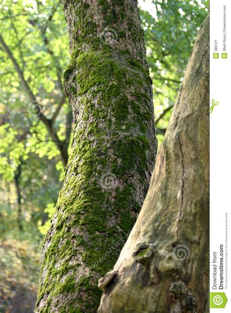 moss covered tree stock image image of tree trunk