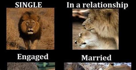 Lion Sex Meme - single vs relationships memes memes