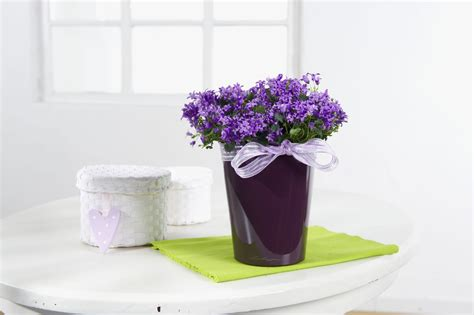 wholesale indoor flowering plant seasonal availability