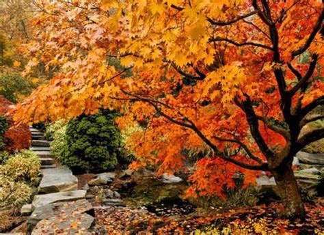 autumn garden japanese autumn garden other nature background