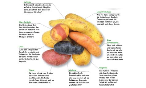 Beschriftung Kartoffelpflanze by Kartoffeln Anpflanzen Gem 252 Se Obst Kr 228 Uter Selbst De