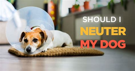 neutering a puppy should i neuter my pros and cons of neutering a