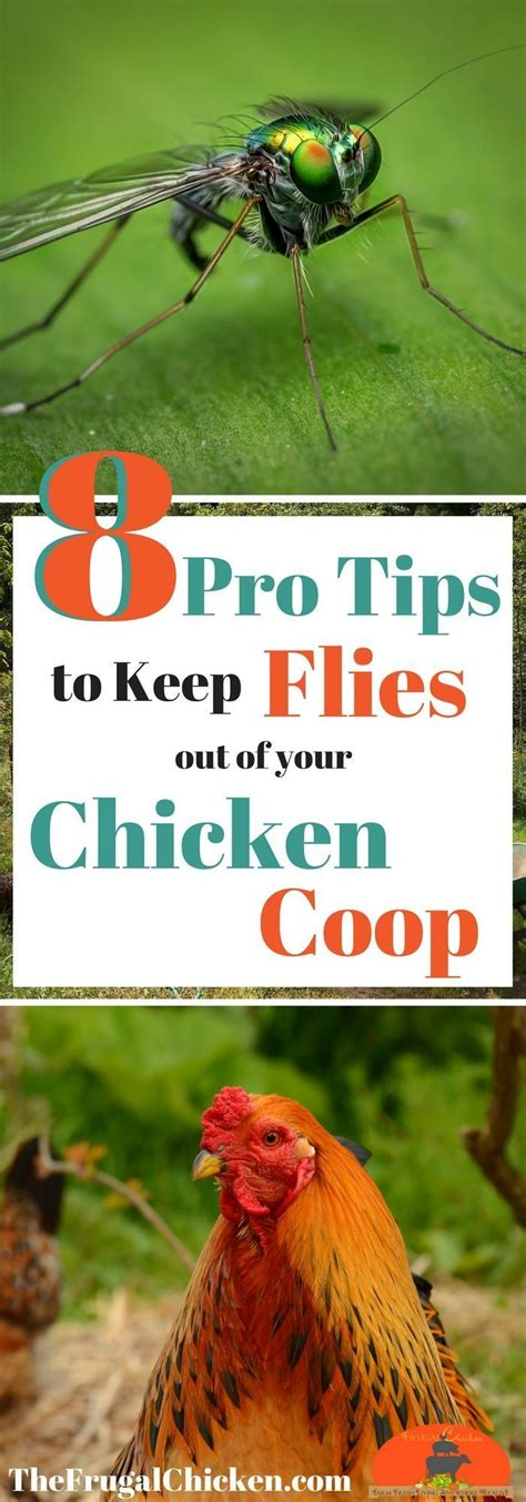 backyard chickens and flies get rid of flies in your chicken coop for happier hens