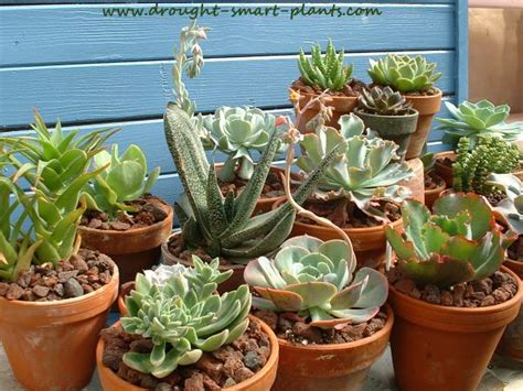 succulent house succulent house plants add some succulents to your house