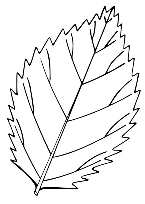 coloring page of a leaf printable leaf coloring pages az coloring pages