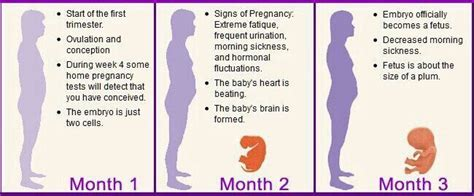 1st month of pregnancy month pregnancy signs and birth