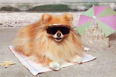 hawaiian puppy names hawaiian names