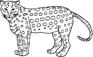 cheetah coloring pages free printable cheetah coloring pages for