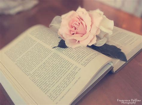 the roses books book and by francescadelfino on deviantart