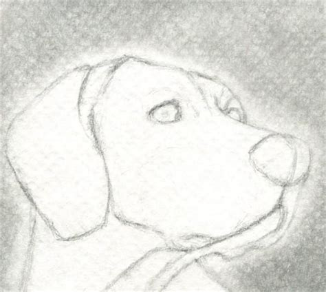 dibujos realistas lápiz 17 best ideas about aprender a dibujar animales on