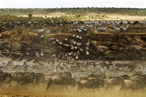 swing migration african safari highlights ultimate tour