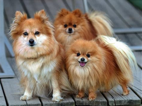 most beautiful breeds 10 most beautiful breeds in the world