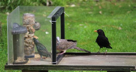 Feeding Set With Juice Feeder Pigeon the experiment at your bird feeder science news for students
