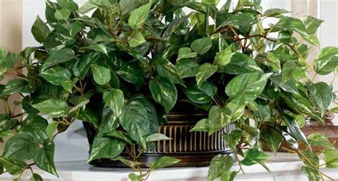 piante ornamentali da interno finte piante artificiali piante finte tipologie di piante finte