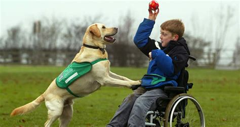 types of service dogs 10 different types of service dogs kickassfacts