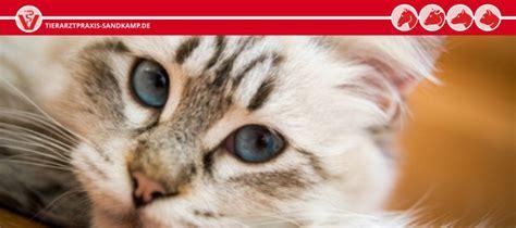 wann werden katzen rollig kastration katze und kater wann ist der richtige zeitpunkt
