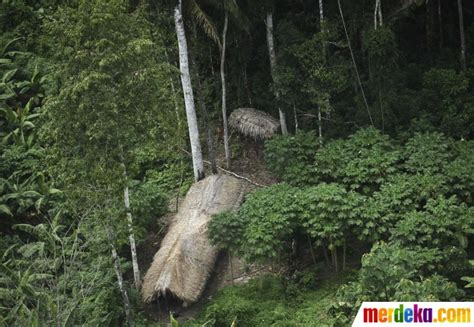 amazon hutan foto kisah sedih suku pedalaman hutan amazon terancam