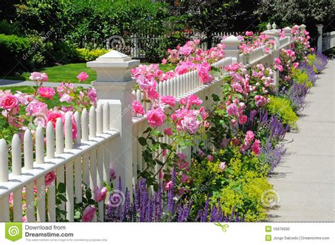 zaun löwe gartenzaun mit rosafarbenen stockfoto bild 16976930