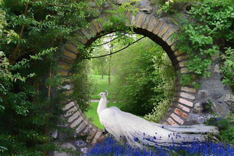 peacock garden photograph by sylvia thornton - Peacock Garden