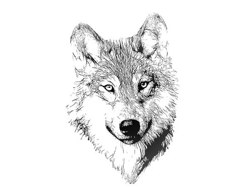 illustrator tutorial wolf wolf portrait illustration drawing free stock photo