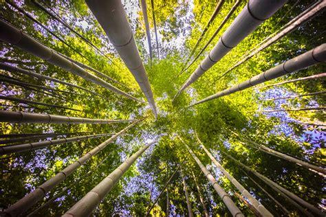 Lu Taman Sinar Matahari gambar pohon alam hutan cabang menanam sinar