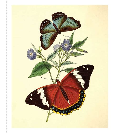 Instan Butterfly instant wall butterfly botanical prints book by media official publisher page