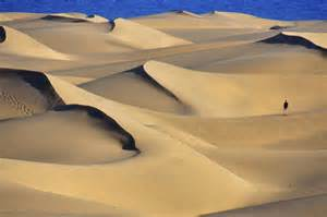 Pictures Of Pictures Of Sand Snaps