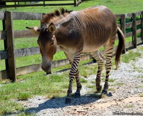 awesome mixed animal breeds breakbrunch