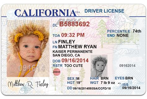 drivers license template send 1 california drivers license photoshop template fiverr
