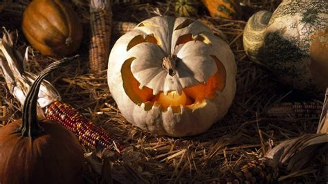 Full HD Wallpaper halloween field pumpkin autumn texas usa