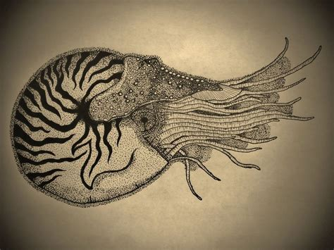 1000 ideas about nautilus tattoo on pinterest shell