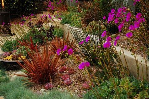 california xeriscape landscaping ideas colorful drought tolerant landscapexeriscape