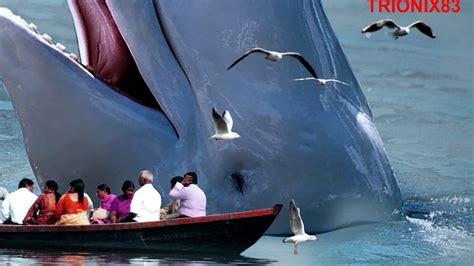 imagenes reales de ballenas ballenas gigantes ballenas cachalote el cachalote mas