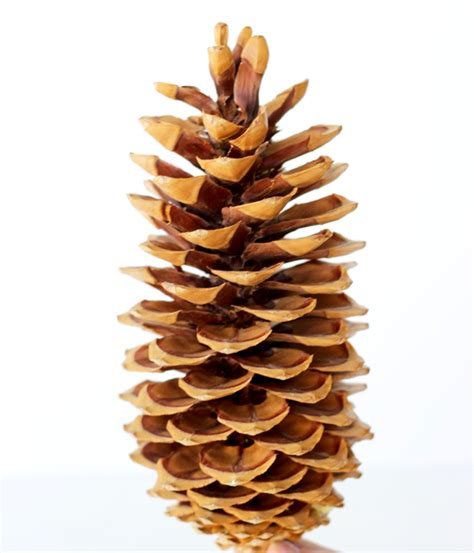 real surveys that pay you 3 00 every time the frugal girls - Real Surveys That Pay You