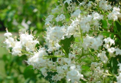 Florist Nearby by 26 Brilliant Florists Nearby Kentucky Dototday