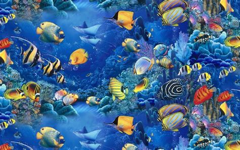 wallpaper colorful fish and interactive water akwarium ryby hd tapety na pulpit widescreen wysokiej