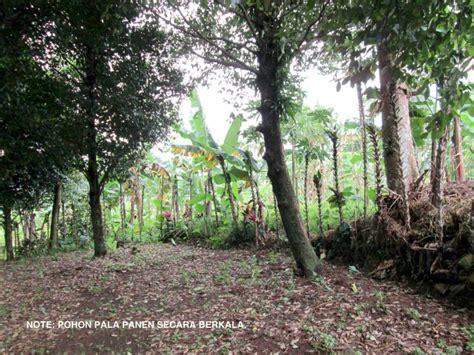 Bibit Cengkeh Di Bogor tanah dijual tanah kebun bogor