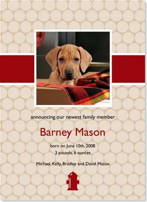 new puppy announcement new puppy announcement animal lovin puppys and new puppy