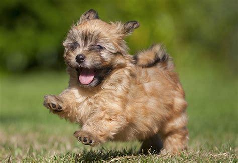 imagenes tiernas de perritos imagenes de los perritos mas peque 241 os hermosos y tiernos