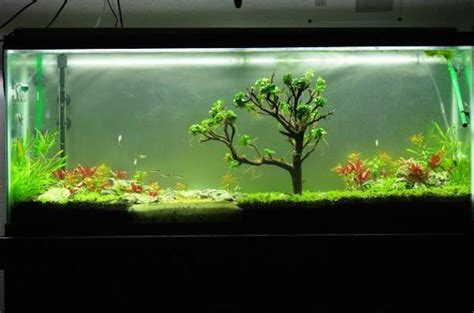 aquascape aquarium supplies natural aquascape moss tree handmad end 10 1 2018 4 15 pm