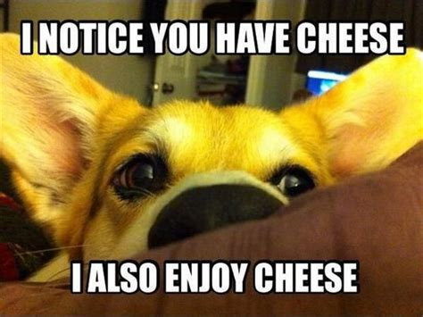 Cheese Meme - i notice you have cheese i also enjoy cheese dog memes