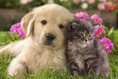 puppies plus cat gallery 171 puppies plus dogs
