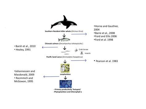 whale food chain