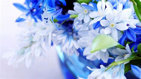 beautiful flower pictures beautiful flower pictures hd 6266 1600 x 900