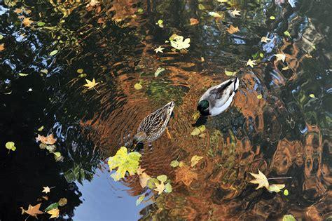 giardini pubblici eventi eventi i colori dell autunno nelle foto