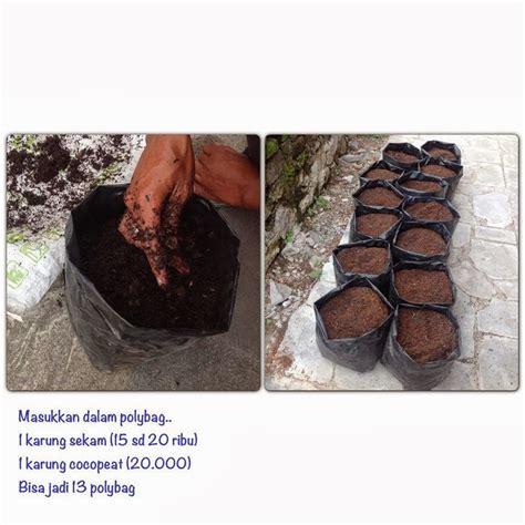 Bibit Bawang Merah Yang Unggul menanam bawang merah secara hidroponik bibit pertanian