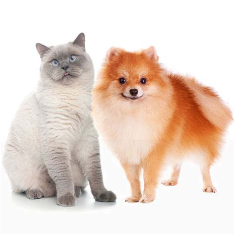 can dogs and cats breed skin and coat supplements for dogs small breed dogs cats what s up with my pet