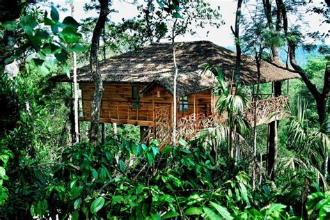 tropical treehouse vacation tranquil resort wayanad treehouse kerala treehouse